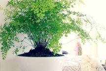 Plants - Flowers - Garden
