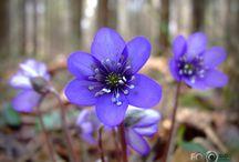 surviving till spring / by madara
