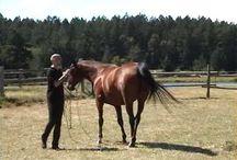 Pferde / Alles informative