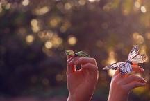 Butterflies / by Samantha Beals