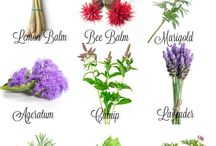 Garden and plants, veggies, pottery