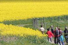 Ierland / Bloeiende velden tijdens wandelreis in Ierland. Jaarlijks wordt er in Ierland in het laatste weekend van juni een kleinschalig, maar heel erg mooie en leuk wandelfestival in de Mourne Mountains in Noord-Ierland georganiseerd.