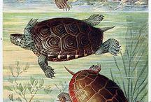 Turtle illustrations