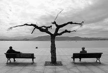 Tree / by Beth dos Santos