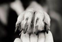 Kutyákkal