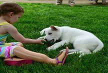 Dog & Kids