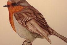 my aves illustration