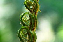 fougères lichens mousses