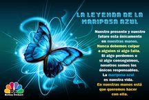 Imagenes Mariposa