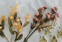 Des fleurs, un raison de vie