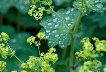 Plants | Rosaceae