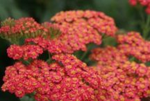 Plants for Summer / We are a Garden Nurseries and Plants are are thing!