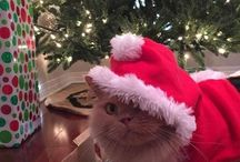 Christmas Cats / All the cute and adorable kitty pics shared by our fans on this Christmas. Cats look really adorable when they are dressed up for Christmas.