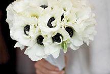 Monochromatic white weddings