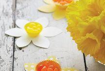 March Flower - Daffodil