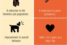 Spay & Neuter / The benefits and importance of spaying and neutering your pets!