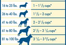 Healthy Pets / Tips & ideas to keep your pets healthy.