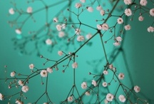 roze & groen