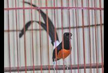 bird sanma