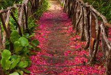 Madeira / Home, Home Sweet Home