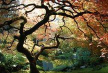Trees / by Kathy Sundprescher
