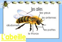 Abeille / by Christelle Arnould