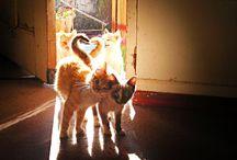 Kitty Time / Crazy cat ladies unite!