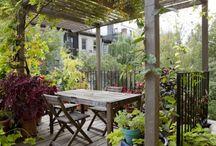 Gardens / by Laura Fenisey