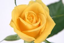 Garden: A Rose by Any Other Name / My favorite garden flowers.  Ones I hope to incorporate into my garden someday.