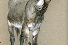 asini e cavalli