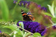 Fotografie Natuur / Verschillende opnames in de natuur of dierenpark