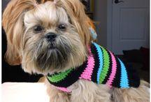 Doggy dress gear