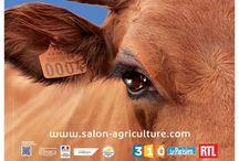 Affiches du Salon / Chaque année, le Salon International de l'Agriculture met à l'honneur une race, une égérie, une thématique à travers ses affiches.