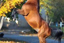 Perde / Horses and tips for horsemen