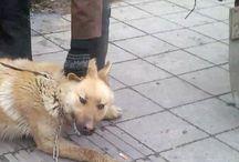 Stop Dog Met