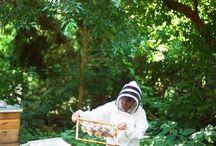 Honungs bin