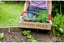 gardening  / by Sarah Fleming Voris