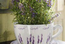 Lavender decorating ideas