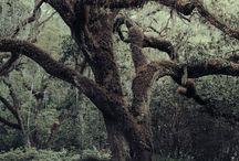 Trees / by Pamela Maluga