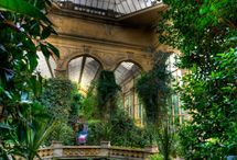 Orangerie / by Ana Miguel