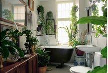 House Plants / House plants interior ideas