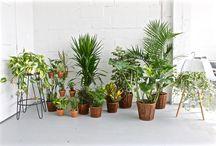 Collection Les beaux ensembles / La collection les beaux ensembles c'est une grande variété de plantes, au meilleur prix possible! En quelques clics et avec la visite de notre livreur sympathique, vous pouvez verdir rapidement et parfaitement vos appartements, condos et bureaux en manque de nature. En plus, c'est une excellente idée de cadeau pour un(e) ami(e)!   http://www.plantzy.com/collections/ensembles