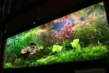 Freshwater planted displays / Pictures of some of the planted display tanks I've made in the past...and some freshwater community tanks that became heavily planted.
