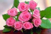 ❀My fav rose ❀