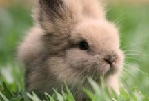 Cute animals and pets!