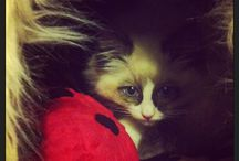 The life of Edwin / Journey into the life of my pet ragdoll :)