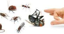 شركة مكافحة حشرات بالدمام / شركة مكافحة حشرات بالدمام