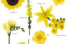 Color: Yellow / by Rose of Sharon Floral Designs, Althea Wiles