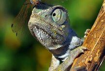 tücskök bogarak