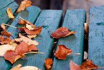 Automne. / Golden leaves. Last summer days. Summer memory's.